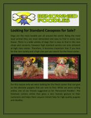 Looking for Standard Cavapoos for Sale.pdf